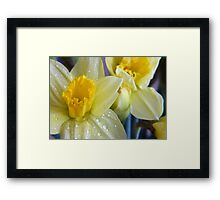 A bunch of daffs Framed Print