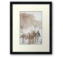 Winter Delight Framed Print