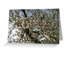 The Light of Nature Greeting Card