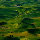 Palouse Green by DawsonImages