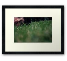 Buttercup Framed Print