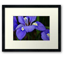 Purple Curves Framed Print
