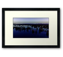 Kelp Forest, Staffin Beach, Isle of Skye Framed Print