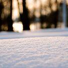 Macro Snow by Daniel Pinnegar