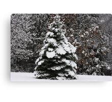 WINTER DID MAKE AN APPEARANCE Canvas Print