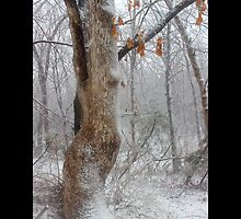 Oak Tree Covered With Snow - Middle Island, New York by © Sophie W. Smith