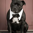 Staffordshire Bull Terrier,getting married,invite the dog ? by Emma  Turner