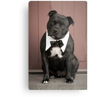 Staffordshire Bull Terrier,getting married,invite the dog ? Metal Print