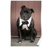 Staffordshire Bull Terrier,getting married,invite the dog ? Poster