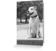 Staffordshire Bull Terrier. Greeting Card