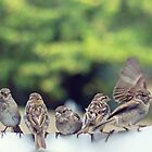 Sparrows in a Row by Bloom by Sam Wales