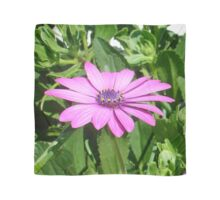 Purple Osteospermum Against Green Leaves Scarf