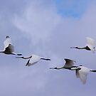 No Over Taking Please  Spoonbills in flight by Kym Bradley