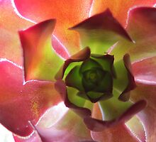 Cactus Flower by KellieV1