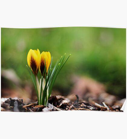 Spring Beckons Poster
