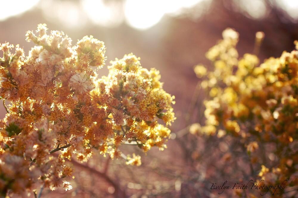 Sun Shining Through by EvelynFaith24
