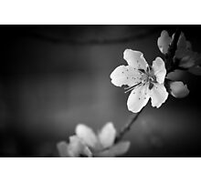 Tree Flower Photographic Print