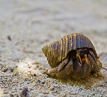 Hermit Crab by Keith O'Brien