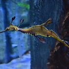 Weedy Sea Dragon by robnox
