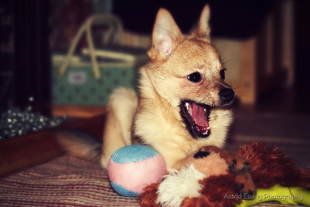 Ha! I won, the toys are mine! by Astrid Ewing Photography