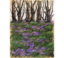 Veilchen im März Photographic Print