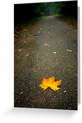 Autumn Leaf,Bury St Edmunds by Suffolk Photography