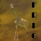 Giraffe Africa by Catherine Hamilton-Veal  