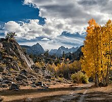 Fall in the Eastern Sierra by Cat Connor