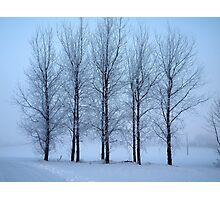 Winter Trees II Photographic Print