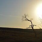 Bent Tree by RenieRutten