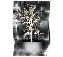 Leafless White Tree Poster
