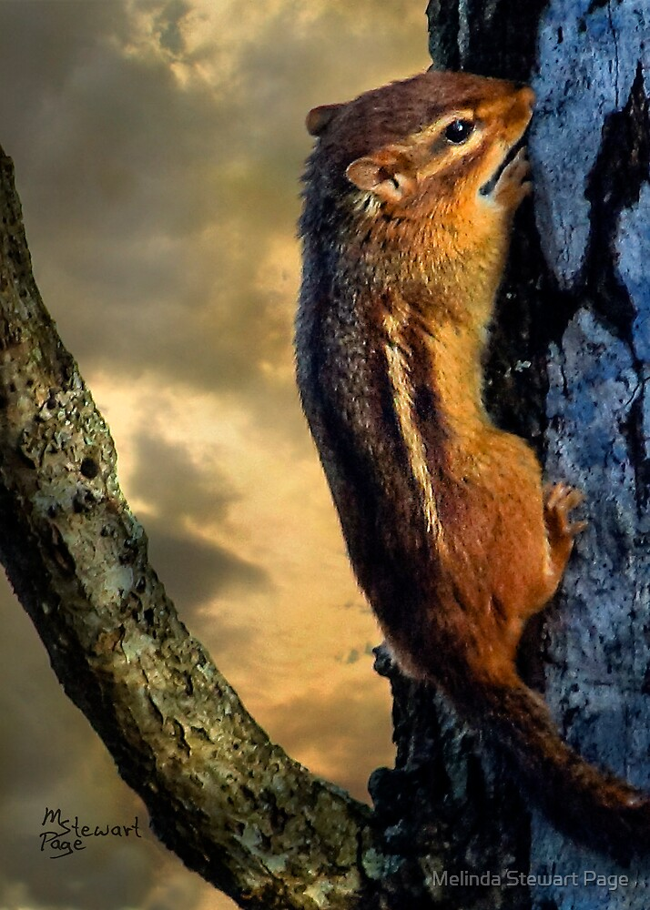 """"""" I Thought You Were Suppose To Be A Ground Squirrel!"""" by Melinda Stewart Page"""