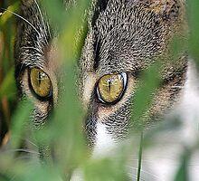 cat by scott staley