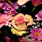 Pink and Yellow Rose by NicholaNR