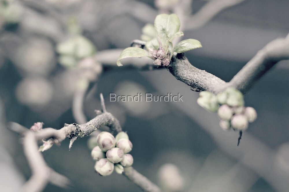delicate hints of spring~ by Brandi Burdick