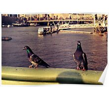 Pigeons on the River Thames Poster