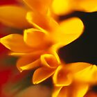 Sunflower! by MoTakesPhotos