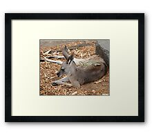 Dragon Roo Framed Print