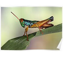 Grasshopper from Bali Poster