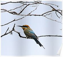 bee eater Poster