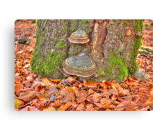 Details of an enchated forest II Canvas Print