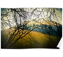 Reflector of Trees  Poster