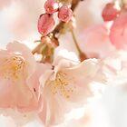 Cherry Bokeh by Nicola  Pearson