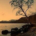 Ullswater Tree - Evening Light by David Lewins