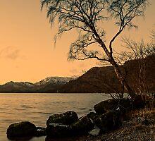 Ullswater Tree - Evening Light by David Lewins