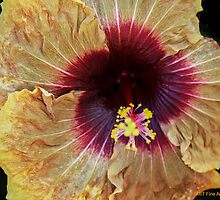 Hibiscus Up Close & Personal by Heather Friedman