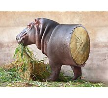 Log Hippo Photographic Print
