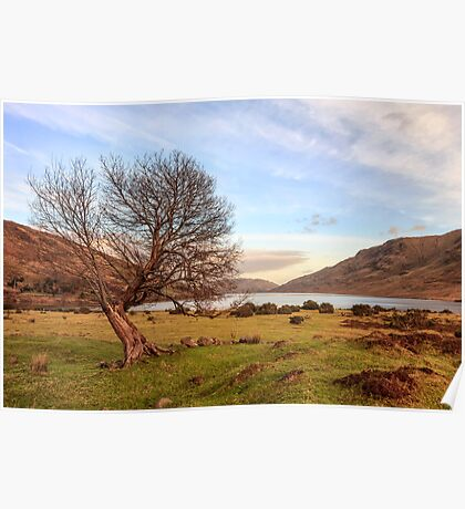 Lone Tree at Lough Nafooey Ireland. Poster