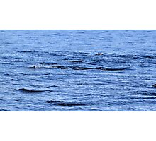Dolphin Fins Photographic Print