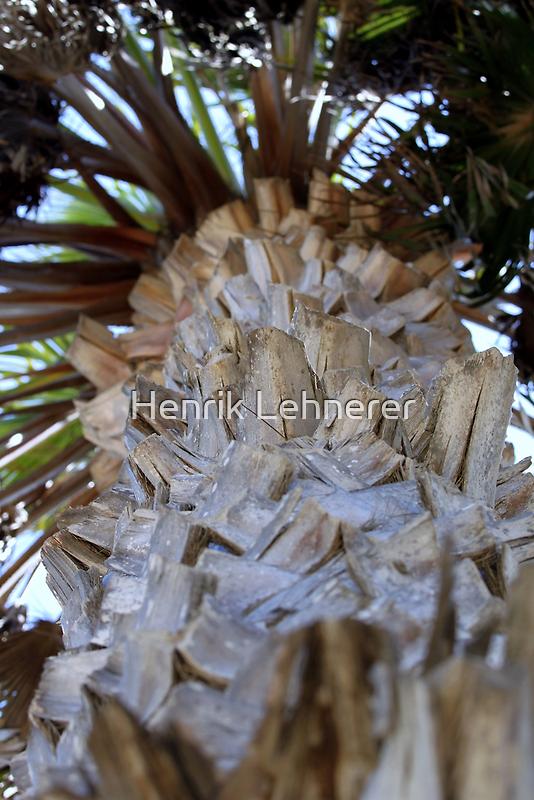 Palm Tree by Henrik Lehnerer